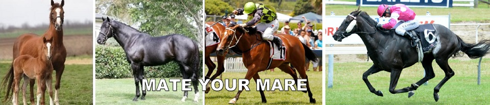 Thoroughbred Mare- Mating | Mate Your Mare